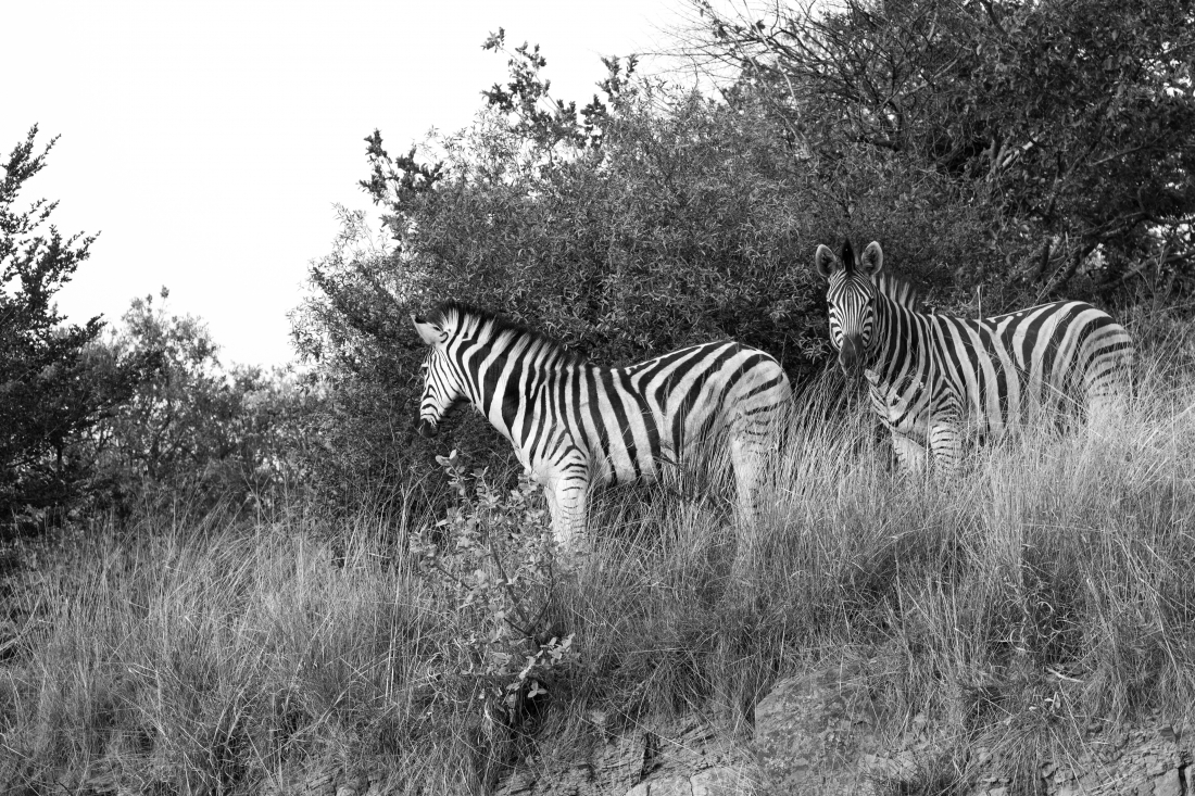 South Africa_101015_0203